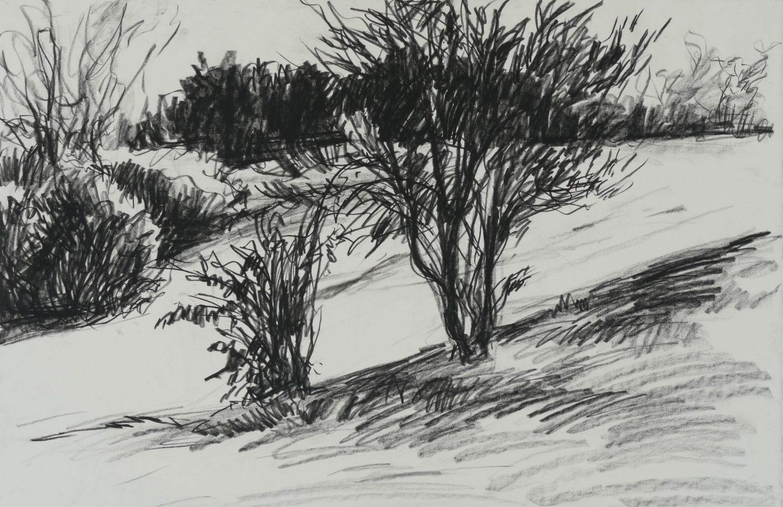 Brown Slope In Shadow III