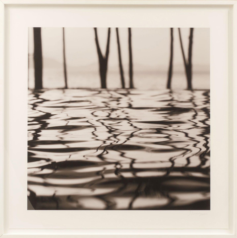 Venera Twigs and Water